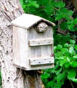 Eastern Screech Owl 13-06