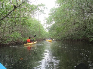 Starting down the mangrove river