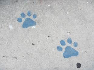Painted paw prints on sidewalk where dogs are
