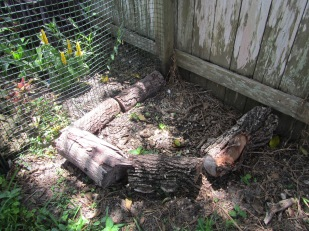 Small compost in chicken run