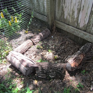 Small compost in chicken run