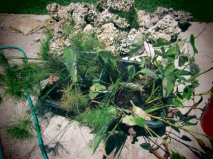 Bog plants waiting for new location