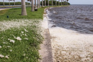 Look at all that Sea Foam