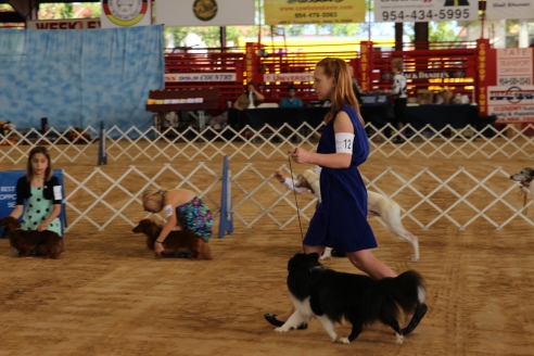 Taking Rudy around the ring in the first competition