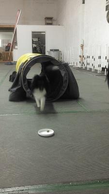 tunnel target work