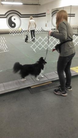 Dog Walk work
