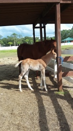 New baby colt born that weekend