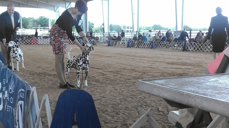 Takota the dalmation, Renee is the handler