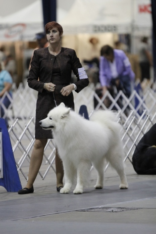 such a cute samoyed