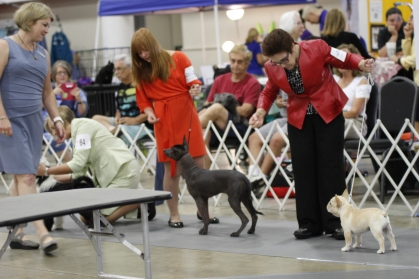back in the ring for best puppy in group