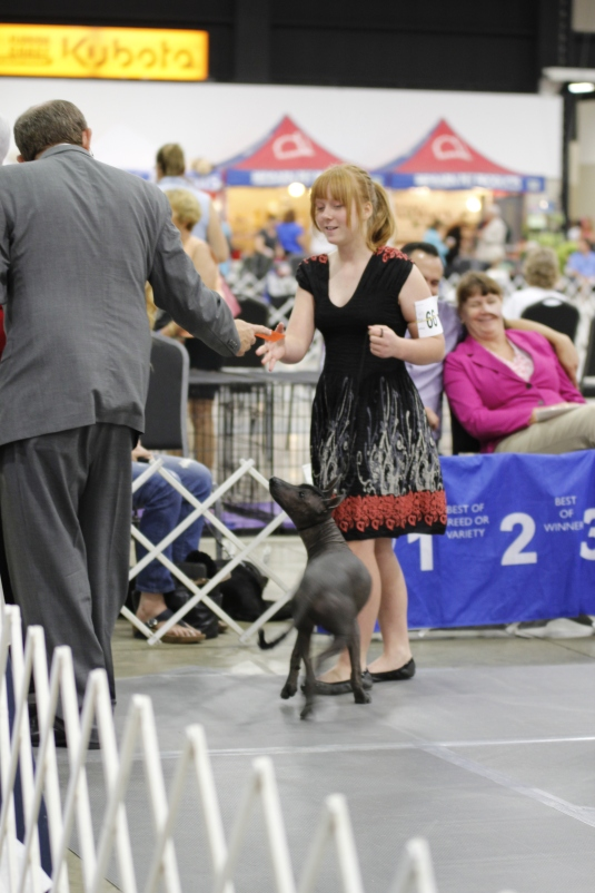 Winning breed with Xima in 4 to 6