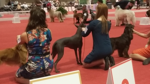 showing in the junior ring