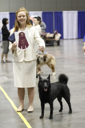 Winning Breed for Buhunds in the NOHS