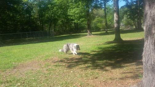 elsa running in the yard